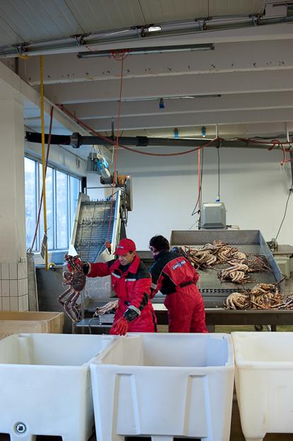 10 2014 Koenigskrabben fuer Brand eins Nordkapp Honningsvag Cape Fish Group AS Anlieferung von Koenigskrabben © (c) Thekla Ehling ,  Koernerstrasse 6-8 ,  50823 Koeln , Germany ,   mobil+49(0)1777635242 ,  http://www.thekla-ehling.de ,  t.ehling@netcologne.de ,  Konto: ING- D i B A F r a n k f u r t ,  BLZ: 500 105 17,  Kto-Nr: 5400 23 24 11 ,  Verwendung nur gegen Honorar + MwSt und Beleg. Urhebernennung wird verlangt.  Keine Rechte Dritter verfuegbar, es gelten die Allgemeinen Geschaefts Bedingungen
