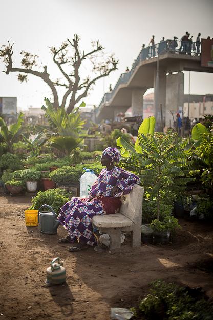 04/2016   Der Stadtgarten Jardin HLM Patte d`Oie wurde 2010 mit Hilfe von Geldern der UNO und der Stadt Dakar zur Förderung des Urban Gardening ins Leben gerufen © (c) Thekla Ehling ,  Koernerstrasse 6-8 ,  50823 Koeln , Germany ,   mobil+49(0)1777635242 ,  http://www.thekla-ehling.de ,  t.ehling@netcologne.de  Verwendung nur gegen Honorar + MwSt und Beleg. Urhebernennung wird verlangt.  Keine Rechte Dritter verfuegbar, es gelten die Allgemeinen Geschaefts Bedingungen